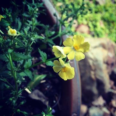 Photo May 17, 12 37 22 PM