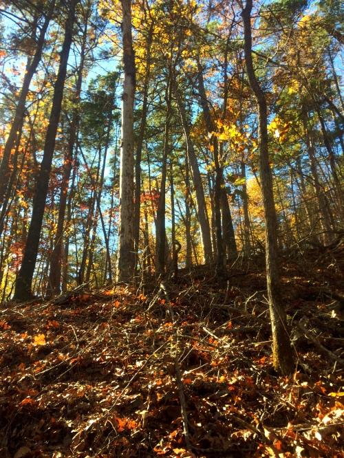 Photo Nov 19, 12 12 12 PM (1)